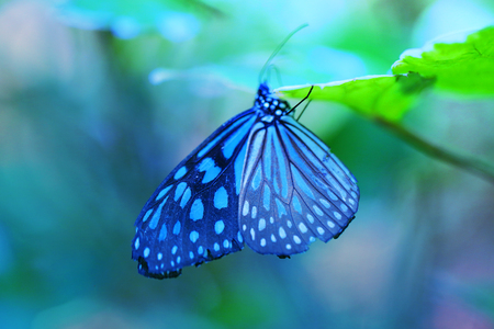 Photo for Beautiful blue tropical butterfly on blurred a background - Royalty Free Image