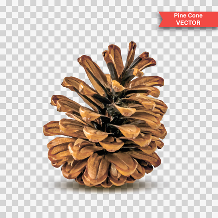 Ilustración de Single detailed pine cone isolated on transparent background. Object Decor for New Year and Christmas. Realistic Vector Illustration - Imagen libre de derechos