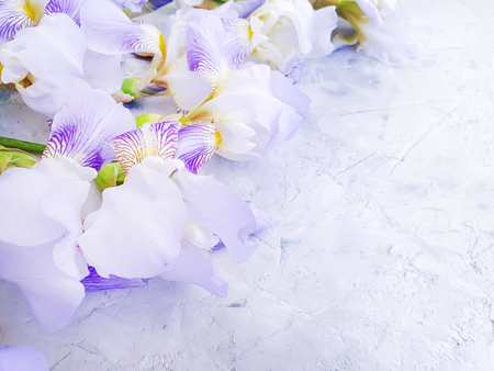Photo for iris flower on gray concrete background frame - Royalty Free Image
