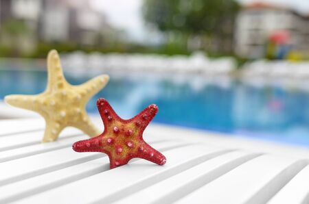 Beautiful starfish on a poolside lounger. Close-up.