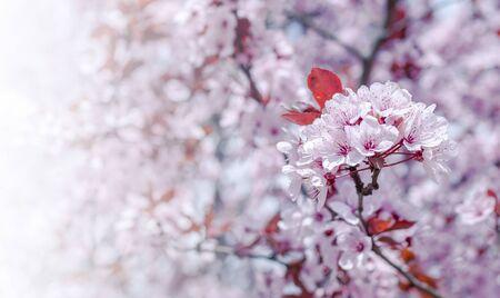 Photo pour Flowers in the trees. - image libre de droit