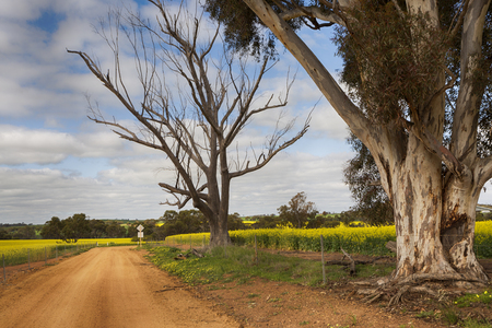 Photo pour A dirt road in the country, running in between canola fields, Australia. - image libre de droit