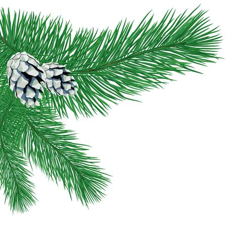 Illustration pour Pine branch with cones. - image libre de droit