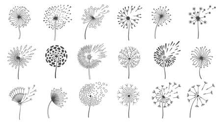 Illustration pour Blowing dandelion seeds. Silhouettes of fluffy wish flowers, spring blossom dandelions blown by wind. - image libre de droit