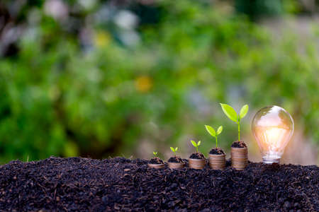 Savings growth concept,plant sprouting from the ground with green  background.