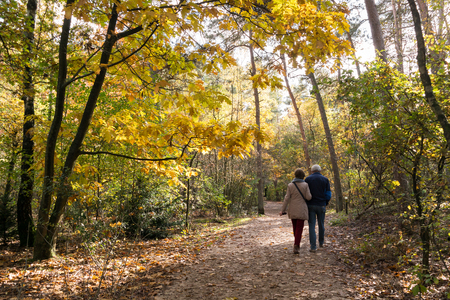 Photo pour Senior couple walking in the woods on a sunny day in autumn, Doorn, Netherlands - image libre de droit