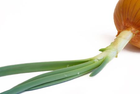 onions with green sprouts on a white background