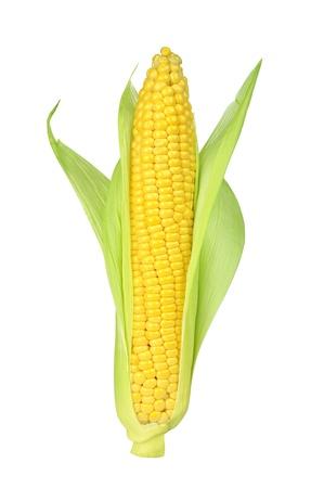 Foto für Ear of Corn isolated on a white background - Lizenzfreies Bild