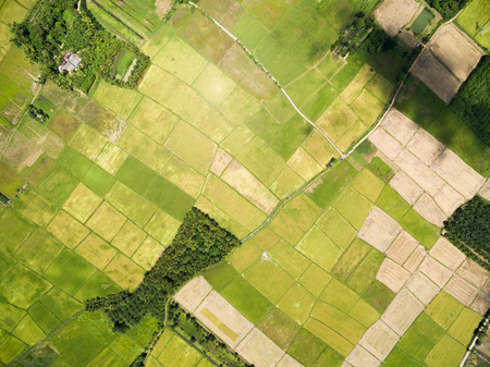 Photo for rice field plantation pattern aerial view - Royalty Free Image