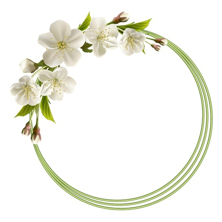 Spring header with white cherry flowers, buds and copy space  Vector illustration