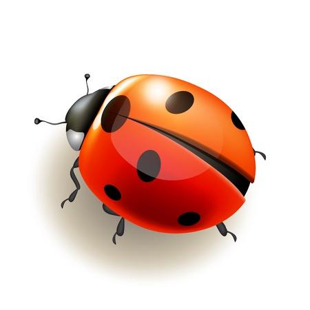 Ilustración de Ladybird on white background    illustration  - Imagen libre de derechos