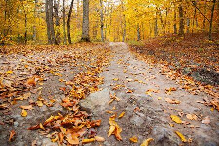 Photo pour autumn beautiful road in the forest background - image libre de droit