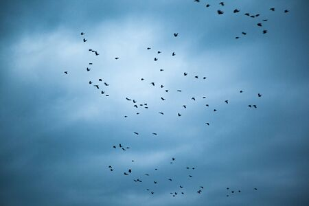 Photo pour flying birds in the dark abstract sky  background - image libre de droit