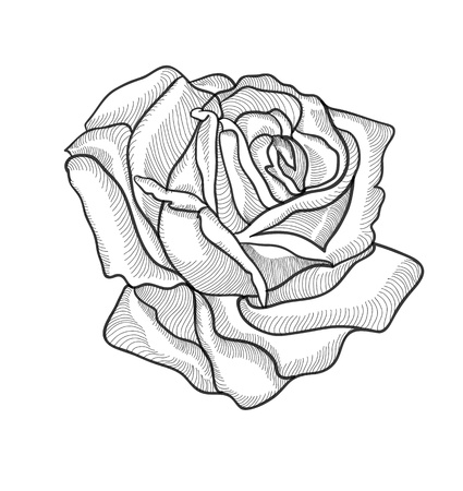 Illustration pour Vintage hand drawing rose vector eps 8 - image libre de droit
