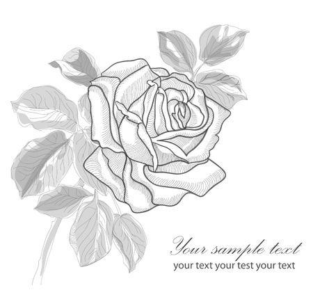 Vintage hand drawing rose