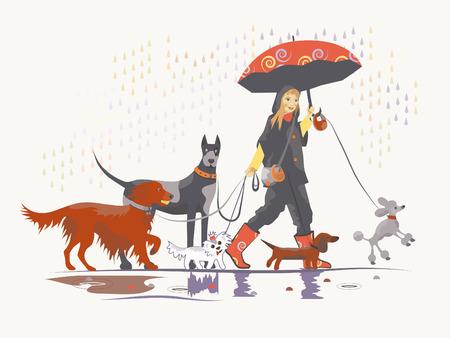 Girl, dog walker, is taking pack of dog for a walk.