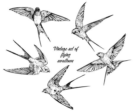 Ilustración de Hand drawn vector flying swallows vintage set. - Imagen libre de derechos