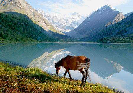 Horse near mountain lake Ak-kem, Altai, Russia, wild landscape