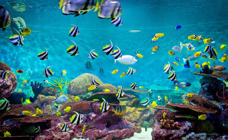 Photo for Fishes and coral, underwater life - Royalty Free Image