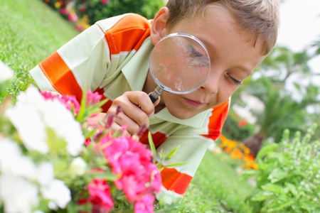 Child, examining with a magnifying glass flower