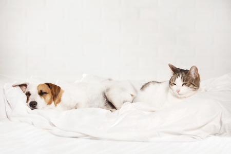 Photo pour Sleeping pets on bed. Cat and dog - image libre de droit