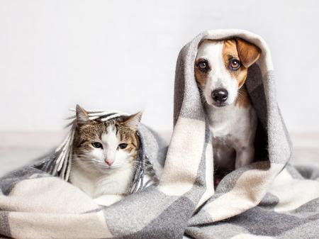 Photo pour Dog and cat under a plaid. Pet warms under a blanket in cold autumn weather - image libre de droit