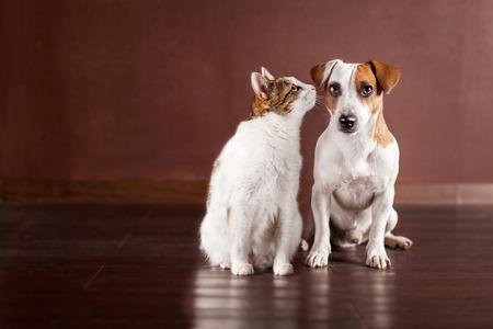 Photo pour Dog and cat at home. Friendship pets - image libre de droit