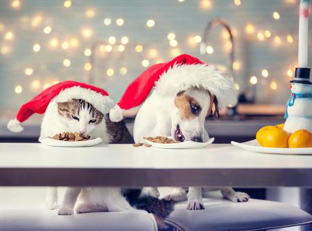 Photo pour Dog and cat in christmas hat eating food. Happy pet santa - image libre de droit