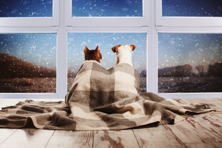 Photo pour Dog and cat under a plaid looking out the window. Pets sitting with their backs - image libre de droit