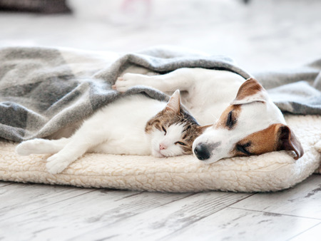 Foto de Cat and dog sleeping. Pets sleeping embracing - Imagen libre de derechos