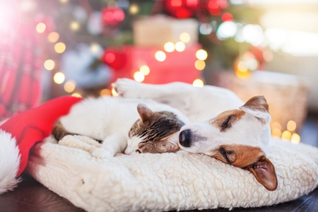 Photo pour Cat and dog sleeping under christmas tree - image libre de droit