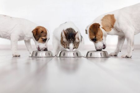 Foto de Dogs and cat eating food - Imagen libre de derechos