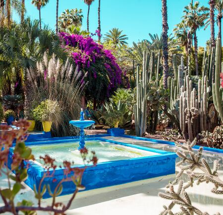 Photo pour Majorelle Garden is a botanical ,tropical garden and artists landscape garden in Marrakech, Morocco. Majorelle Blue - image libre de droit