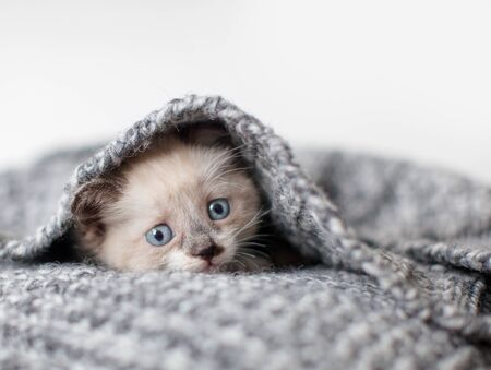 Photo pour Kitten on a white knitted blanket. Little cut cat at home - image libre de droit