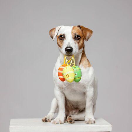 Photo pour Dog with Easter egg. Happy pet - image libre de droit