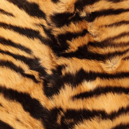 beautiful detail of black stripes on a tiger pelt ( real )