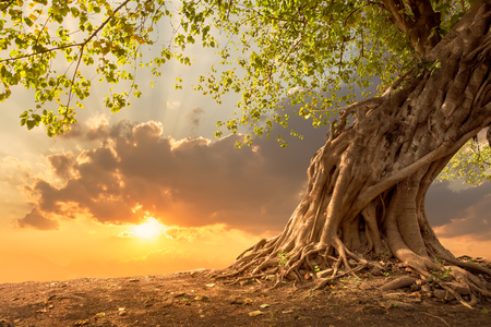 Photo pour Beautiful tree at sunset vibrant orange with free copy space. - image libre de droit