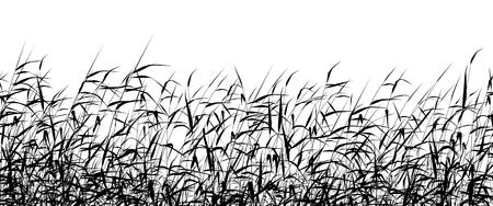 Illustration pour Detailed editable vector silhouette of a reed-bed - image libre de droit