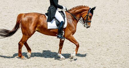 Photo pour Dressage horse and rider in black uniform. Beautiful horse portrait during Equestrian sport competition, copy space. - image libre de droit