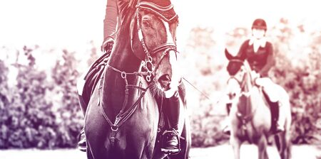 Photo pour Black dressage horse and rider in uniform performing jump at show jumping competition, duotone, black and white. Equestrian sport background.Beautiful horse portrait during dressage competition. Selective focus. - image libre de droit
