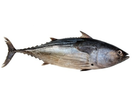 Foto de a tuna fish isolated on a white background - Imagen libre de derechos