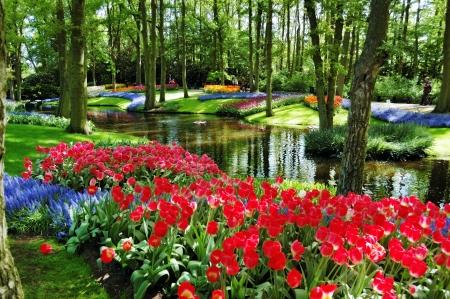Colorful flowers and blossom in dutch spring garden Keukenhof  Lisse, Netherlands