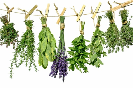 Herbs hanging upside-down from a line