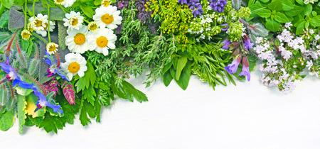 various fresh medicinal herbs on a board