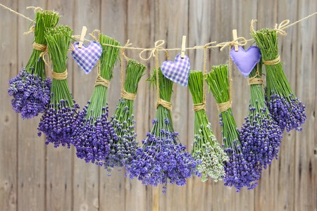 different varieties of lavender hanging in bundle on a leash