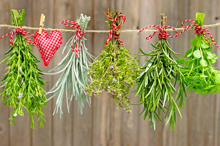 savory, curry plant, thyme, rosemary and basil hanging on a leash