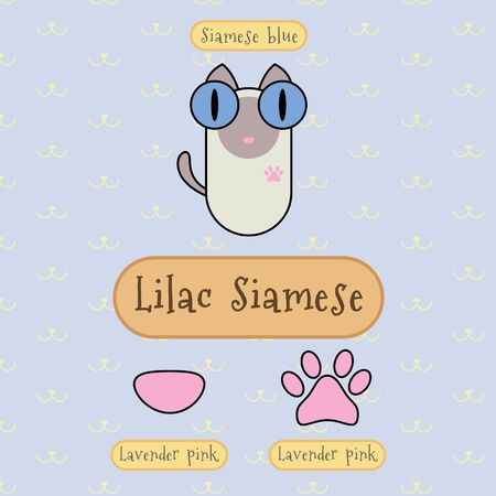 Infographic show detail of lilac siamese cat, eye color, nose color and foot color.