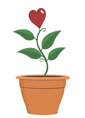 Plant in terra cotta pot with heart in bloom for Valentine's Day