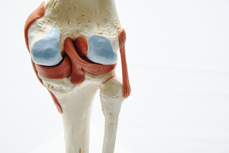 Close-up view of artificial human knee joint model in medical office