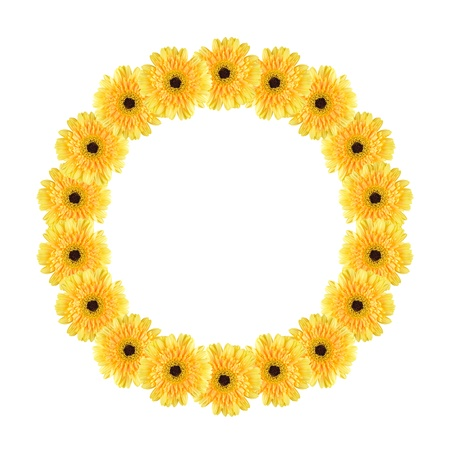 Yellow daisy-gerbera flowers create a circle frame on white background